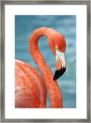 Pink Flamingo. Framed Print