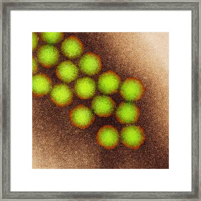 Poliovirus Particles, Tem Framed Print by Nibsc