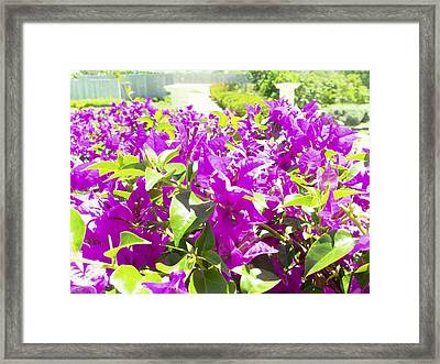 Ponce Urban Ecological Park Framed Print
