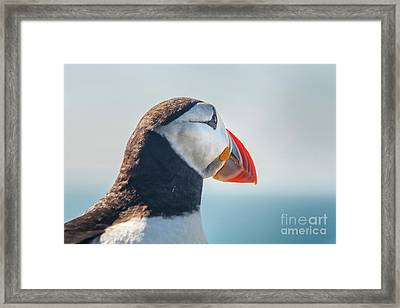 Framed Print featuring the photograph Puffin In Close Up by Patricia Hofmeester