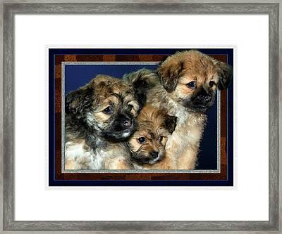 3 Pups Framed Print by Harry Hunsberger