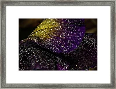 Purple And Yellow Framed Print