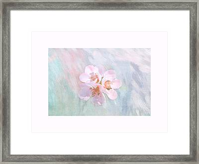 Quince Art Framed Print by Mary Bellew
