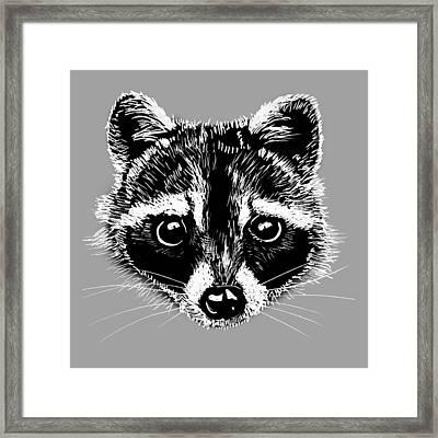 Raccoon Framed Print by Masha Batkova