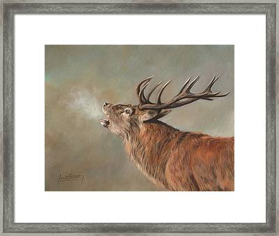 Red Deer Stag Framed Print by David Stribbling