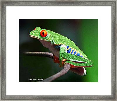 Red-eyed Leaf Frog Framed Print by Larry Linton