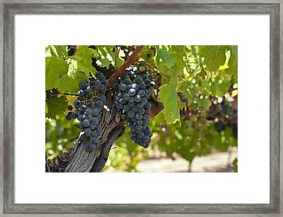 Red Vines Framed Print by Ulrich Schade