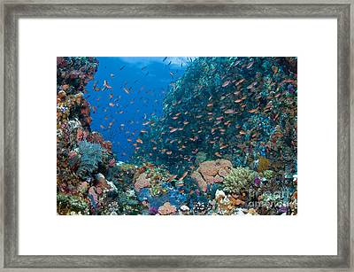 Reef Scene With Corals And Fish Framed Print by Mathieu Meur