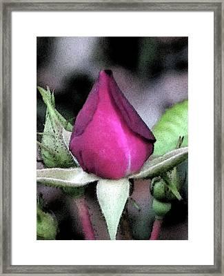 Rosebud Framed Print by Michele Caporaso