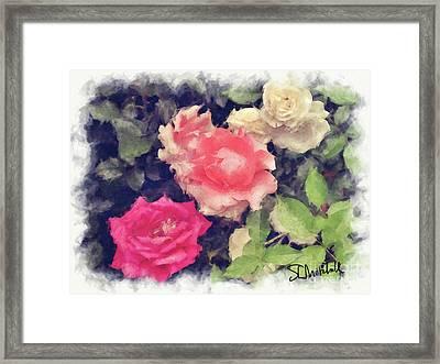 3 Roses Framed Print