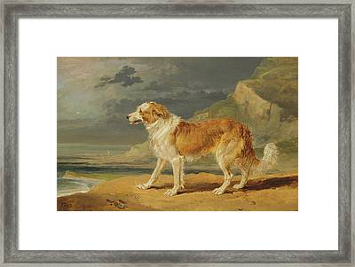 Rough Coated Collie Framed Print by James Ward
