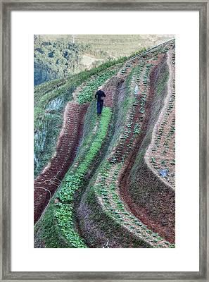 Sapa - Vietnam Framed Print