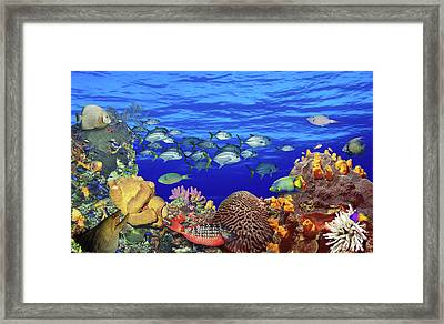 School Of Fish Swimming Near A Reef Framed Print by Panoramic Images