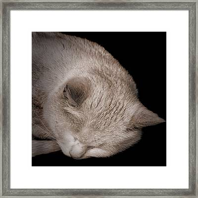 Sleeping Cat Framed Print by Martin Newman