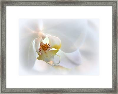 Soft Spoken Framed Print by Jessica Jenney