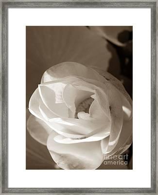 Softly Framed Print