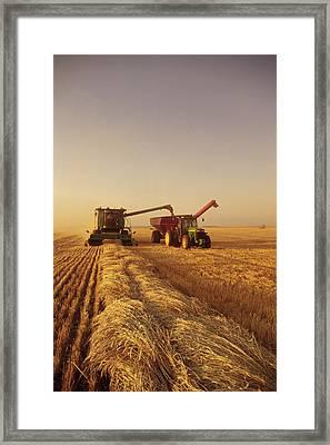 Spring Wheat Harvest, Tiger Hills Framed Print by Dave Reede