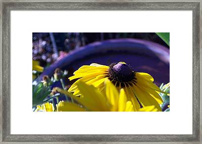 Sun Glory Series Framed Print