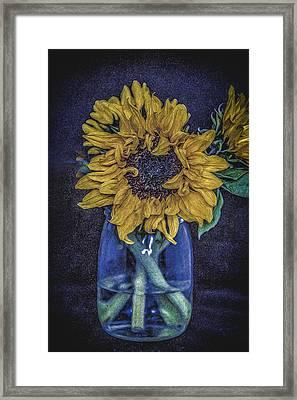Sunflower Framed Print by Angela Aird
