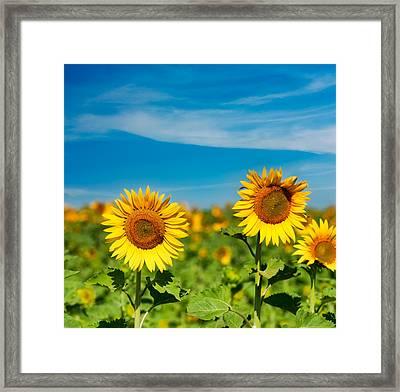 Sunflower Framed Print by Boyan Dimitrov