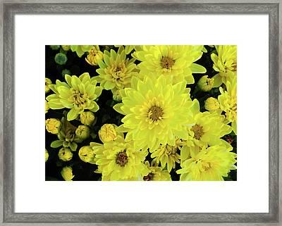 Sunshine Smiles Framed Print by JAMART Photography