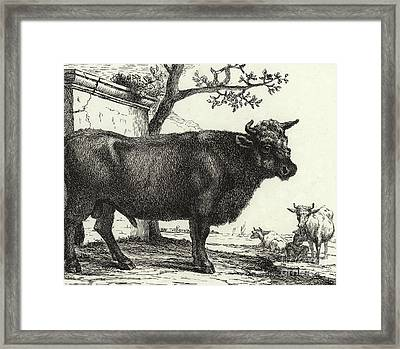 The Bull Framed Print by Paulus Potter