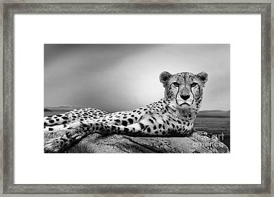Framed Print featuring the photograph The Cheetah by Christine Sponchia