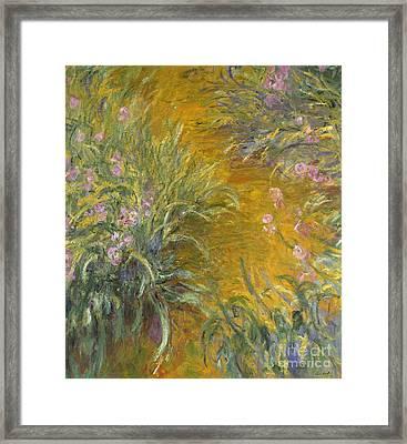 The Path Through The Irises Framed Print by Claude Monet