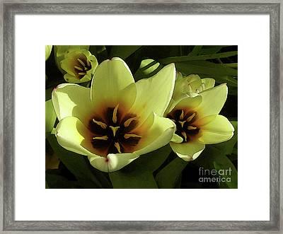 Tulip Lights #4 Framed Print