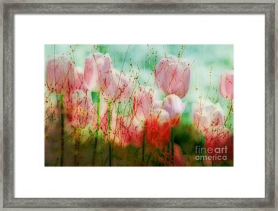 Tulips  Framed Print by Iris Greenwell