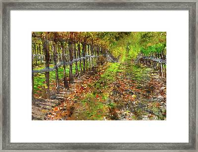 Vineyard In Autumn Framed Print by Brandon Bourdages