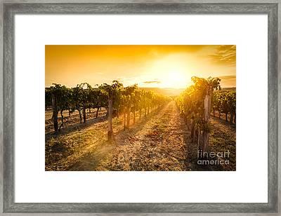 Vineyard In Tuscany, Italy Framed Print by Michal Bednarek