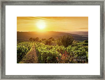 Vineyard Landscape In Tuscany, Italy. Wine Farm At Sunset Framed Print by Michal Bednarek