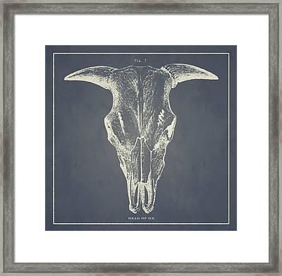 Vintage Ox Head Framed Print
