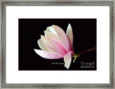 Welcome Spring Framed Print by Jeannie Rhode