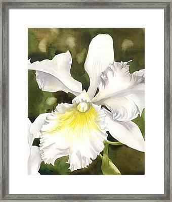 White Cattleya Orchid Framed Print