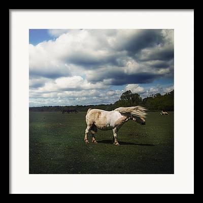 Forelock Photographs Framed Prints