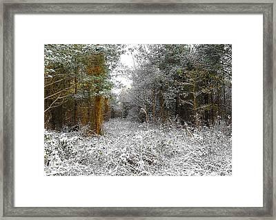 Winter Time Framed Print by Svetlana Sewell