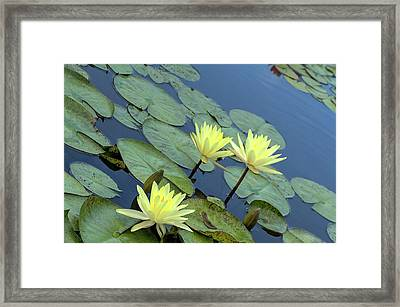 3 Yellow Framed Print