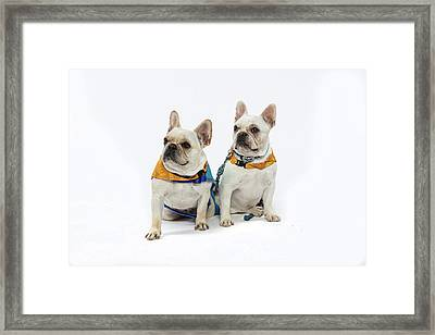 3010.062 Therapet Framed Print by M K  Miller