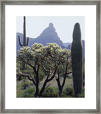 313737 Montezumas Head Framed Print