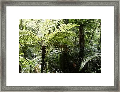 Jungle Leaves Framed Print by Les Cunliffe