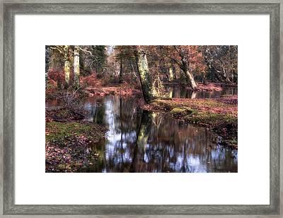 New Forest - England Framed Print by Joana Kruse