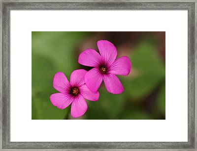 3d Pink Framed Print by Richard Patmore