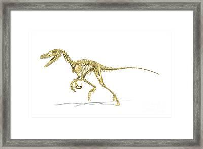 3d Rendering Of A Velociraptor Dinosaur Framed Print