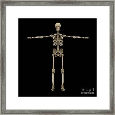 3d Rendering Of Human Skeletal System Framed Print by Stocktrek Images