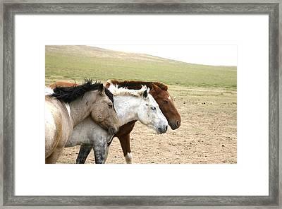 3horses Framed Print