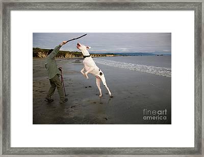 Albino Great Dane Framed Print