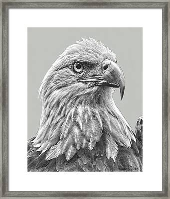 American Bald Eagle Framed Print by Larry Linton