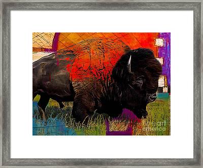 American Buffalo Collection Framed Print